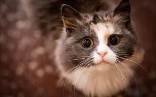 Кошку рвет пеной: возможные причины и способы доврачебной помощи