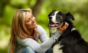 Здоровые зубы – здоровая собака