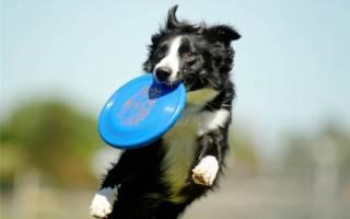 Важно играть с собакой