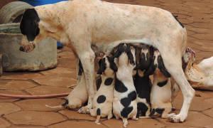 Как выкормить недельного щенка