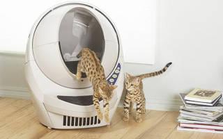 Оцените все плюсы автоматического туалета для кошек!