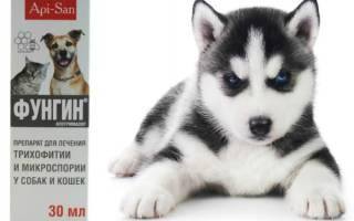 Фунгин для собак: назначение и способы применения