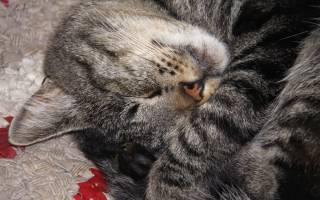 Как происходит эвтаназия кошки