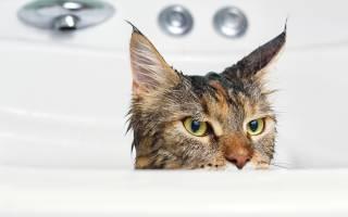 Когда и чем можно мыть кота после кастрации