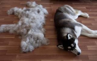 Почему щенок линяет