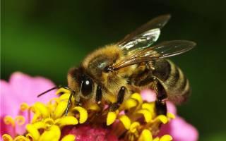 Профилактика заболеваний и обработка пчел