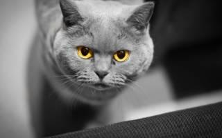 Кастрация кота на дому: подготовка, плюсы, минусы