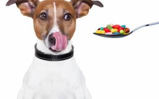 Как дать жидкое лекарство собаке?