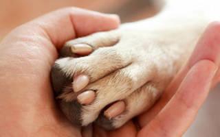 Как лечить грибок у собаки