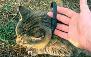 Средства от блох для кошек: какой сделать выбор