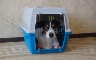 Сумка-переноска для собак: обзор разновидностей