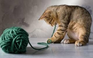 Загадки про кошек и котов
