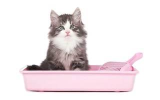 Наполнитель для кошачьего туалета: виды и свойства