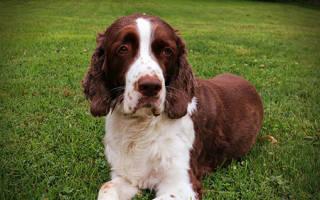 Лечение запора у собак в домашних условиях: простые и эффективные способы