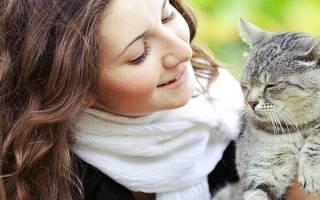 Всё об уходе за беременной кошкой