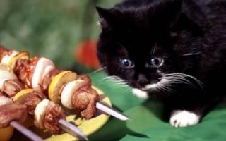 Рецепты корма для кошек и котов своими руками