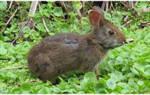 Стригущий лишай у кроликов и его лечение