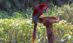 Какую выбрать кормушку для попугая