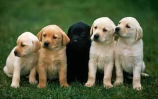 Породы собак с самым упрямым характером