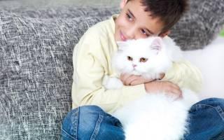 Как приучить кошку к рукам: быстро и просто