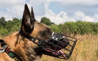 Закон о намордниках для собак