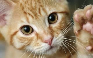 Зачем кошки мнут лапами разные поверхности