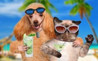 Стоит ли брать с собой в отпуск домашнего любимца?