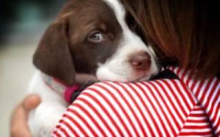 Взрослая собака боится гулять на улице: пошаговая инструкция, как победить страх