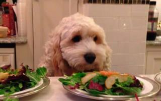 Каждая ли собака ест щенков