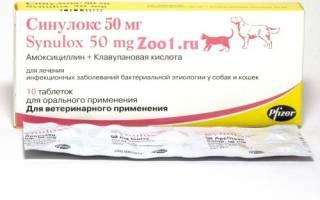 Синулокс для кошек — обзор препарата