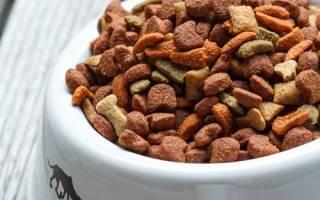 Можно ли кормить собаку кошачьим кормом: отвечаем подробно