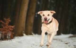 Мультикан 4 для собак