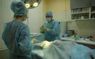 Восстановление собаки после стерилизации