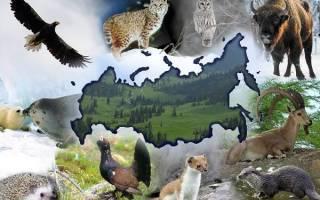 Уникальные животные России
