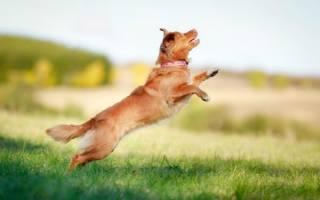 Как отучить собаку прыгать на людей: методы для любого возраста