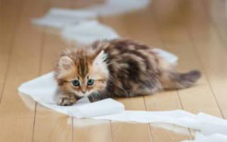 Как отучить кошку гадить в неположенном месте? Советы и правила