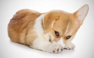 Почему собака боится грозы: основные причины, советы и рекомендации