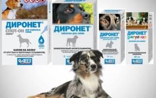 Диронет – комбинированное противоглистное лекарство для собак