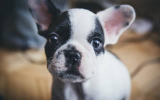 Приучаем собаку или щенка к сухому корму: правила перехода на промышленные корма