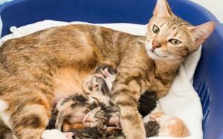 Кошка дышит с открытым ртом после родов: причины и последствия