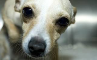Отек мозга у собак: причины, виды и симптомы