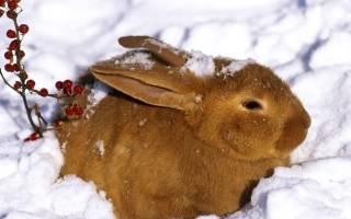 Кролики зимой: как поить кроликов зимой