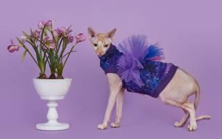 Одежда для кошек — необходимость или дань моде