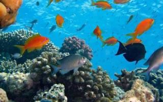 Рыбы коралловых рифов: красивые и странные