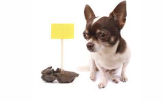 Как отучить собаку метить: выявляем причины и определяем методы воздействия