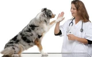Остеопороз у собак: причины и способы лечения