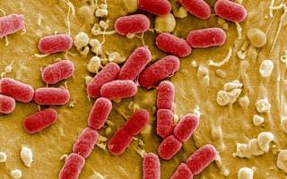 Туберкулез у собак: симптомы, терапия и риск передачи человеку