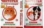 Чистотел — универсальное средство для кошек