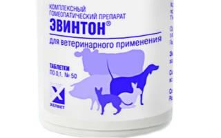 Эвинтон — иммуномодулятор для собак