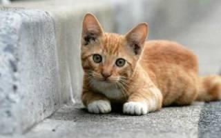 От уличного сорванца к домашнему питомцу или Можно ли брать в дом котенка с улицы